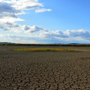 étang de Vendres, un été bien sec !