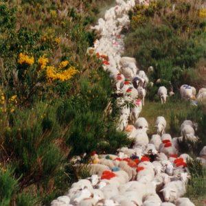 Descente du Fageas - Dans les Cévennes du massif de l'Aigoual
