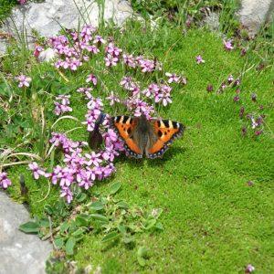 Papillon petite tortue -  Aux Petites Oulettes...