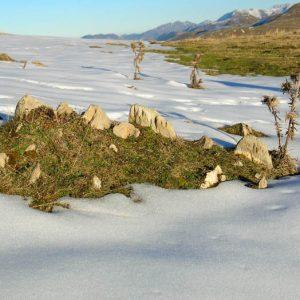 Jardin d'hiver - Composition naturelle, premières neiges d'automne à Serre de mont Cassan (1 850 m)