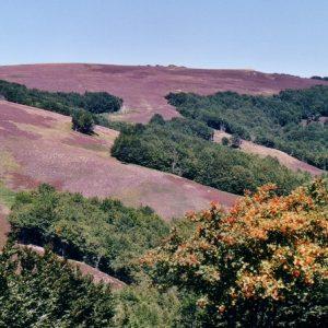 Mont du Bougès (Cévennes) - Il se situe entre le massif de l'Aigoual (au sud), et celui du Lozère au nord
