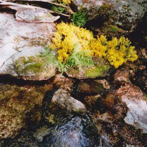 Composition naturelle - ruisseau du Montlouvier