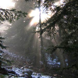 Montagne de la Seube, 1560 m -  Contre-jour le soir dans le sous-bois de la forêt...