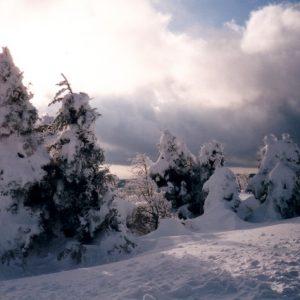 Font-Froide - Au mont Aigoual en Cévennes