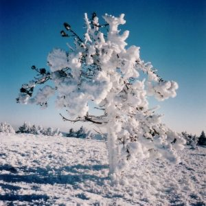 Pin de glace - Vers le sommet du Finiels