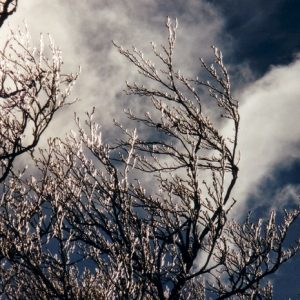 Branches de hêtre au Lingas - Montagne de l'Aigoual