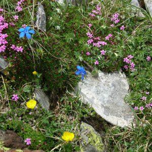 Fleurs des Pyrénées - Composition florale naturelle à 2 060 m d'altitude