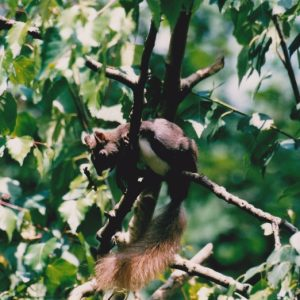 ... et l'écureuil gris... de nos bois, aussi...