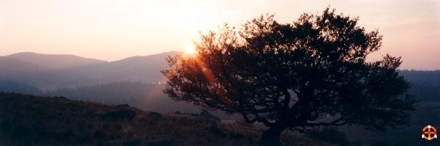 Coucher sur le Lingas - Hêtre à la montagne du Lingas, mont Aigoual
