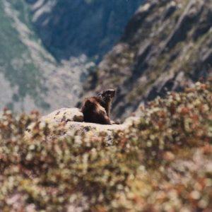 Les adieux des cimes...  avant la descente assez vertigineuse, de 700 mètres (2 340 m à 1 640 m), des lacs d'Estibe au fond du val du Lutour... Il est recommandé d'être extrêmement vigilant !