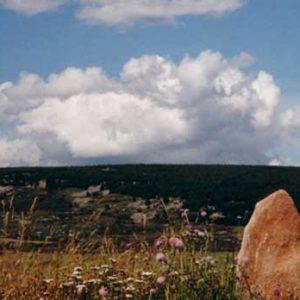 Menhirs de la Cham des Bondons - Situés vers les Laubies, au lieu dit La Terre basse, massif du Lozère