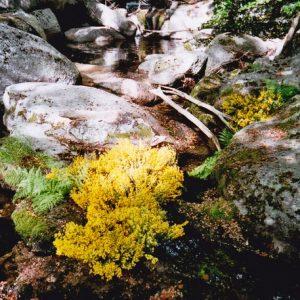Ruisseau du Montlouvier - Massif de l'Aigoual, composition nature