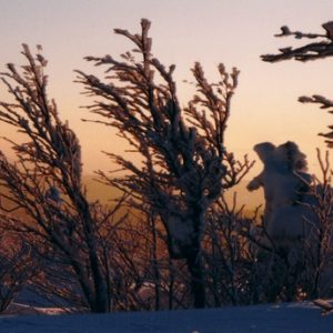 Crépuscule à Font-Froide - Mont Aigoual