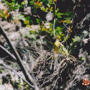 Nourrissage... La bergeronnette des ruisseaux