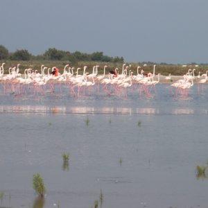 berges de l'étang de Malagroy