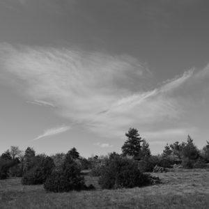 """""""nuage-oiseau"""" ... un jour sur le Causse du Larzac, vers la Couvertoirade ..."""