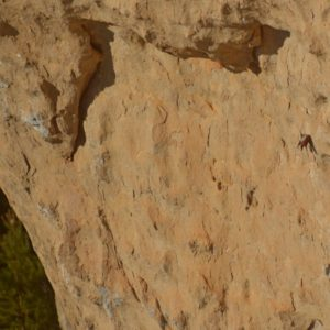 Tichodrome échelette - Roc Altès (Causse-Noir)